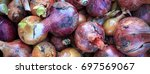 the seasonal harvest of onion... | Shutterstock . vector #697569067