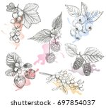 sketch berries set vector...