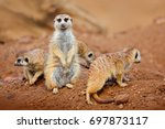 big animal family. funny image... | Shutterstock . vector #697873117
