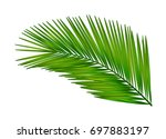 palm leaf for your design.... | Shutterstock .eps vector #697883197