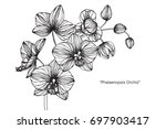 hand drawn and sketch orchid... | Shutterstock .eps vector #697903417