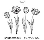 hand drawn and sketch tulips... | Shutterstock .eps vector #697903423