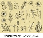plants with leaves and berries...   Shutterstock .eps vector #697910863