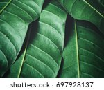 green leaves background | Shutterstock . vector #697928137