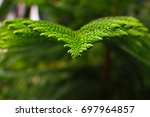 green leaves isolated from the