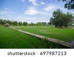 the bamboo bridge across rice... | Shutterstock . vector #697987213