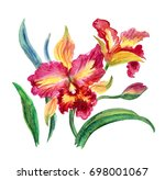 pink and yellow orchid ... | Shutterstock . vector #698001067
