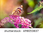 butterfly on colorful flower  | Shutterstock . vector #698053837
