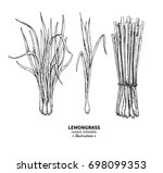 lemongrass drawing. isolated... | Shutterstock . vector #698099353