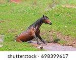 a horse is bathing in a creek | Shutterstock . vector #698399617
