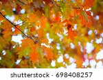 yellow maple leaves on a twig... | Shutterstock . vector #698408257