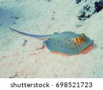 Blue Spotted Stingray In The...