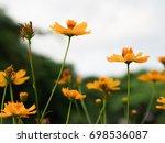 yellow flower in garden | Shutterstock . vector #698536087