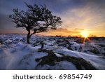 Tree In Snow At Sunset