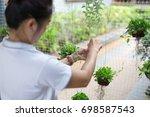 women vertical gardening  green ... | Shutterstock . vector #698587543