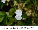 wild flowers along the hiking... | Shutterstock . vector #698594893