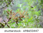 flowers and insect in the... | Shutterstock . vector #698653447