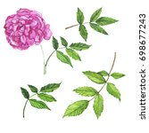 pink rose flower and green... | Shutterstock . vector #698677243