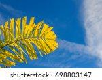 Small photo of Foxtail palm (Wodyetia bifurcate A.K. Irvine) leaves under blue sky background.