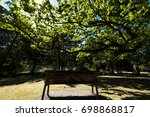 Bench Under The Tree In Puplic...