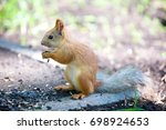 squirrel sits on the grass and... | Shutterstock . vector #698924653