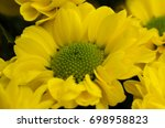 Small photo of Blossom of Asterales, Asteraceae