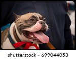 french bulldog in outdoor... | Shutterstock . vector #699044053