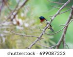 Small photo of The fork-tailed sunbird (Aethopyga christinae) is a species of bird in the Nectariniidae family. It is found in China, Hong Kong, Laos, and Vietnam. Its natural habitat is subtropical.