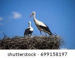 stork's nest  natural stork's... | Shutterstock . vector #699158197