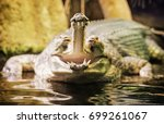 Small photo of Gharial - Gavialis gangeticus with the horrible jaw. Detailed animal scene. Asian nature. Yellow photo filter.