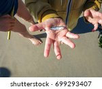 A Little Persons Hand Holds A...