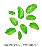 isolated fresh green leaf on... | Shutterstock . vector #699300097
