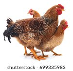 red rooster and hens isolated... | Shutterstock . vector #699335983