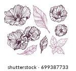 flower set  highly detailed...   Shutterstock .eps vector #699387733