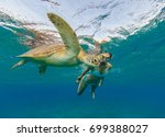 snorkeling woman with hawksbill ... | Shutterstock . vector #699388027