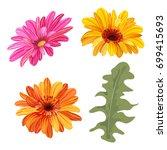 set of gerbera daisy  orange ... | Shutterstock .eps vector #699415693