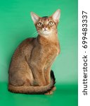 Small photo of Abyssinian cat on green background