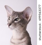 devon rex sphynx bald cat on... | Shutterstock . vector #699563377