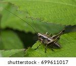 cricket | Shutterstock . vector #699611017
