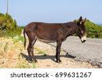 Wild funny donkey outdoors