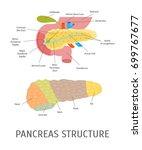 cartoon structure of a... | Shutterstock .eps vector #699767677