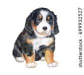 bernese mountain dog. puppy... | Shutterstock . vector #699932527