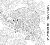 coloring page of raccoon... | Shutterstock .eps vector #700044397