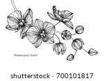 hand drawn and sketch orchids... | Shutterstock .eps vector #700101817