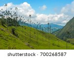 wax palm trees of cocora valley ... | Shutterstock . vector #700268587