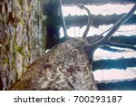 Stock photo unusual phenomenon long live freedom tree growing through massive concrete grid concept of 700293187