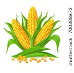 corncobs with yellow corns and... | Shutterstock .eps vector #700308673