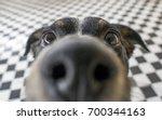 Playful dog face  black white...