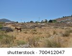 a mule stands tethered to a...   Shutterstock . vector #700412047