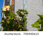 bright yellow suffused with...   Shutterstock . vector #700440613